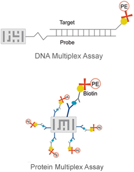 DNA and Protein Multiplex Assays